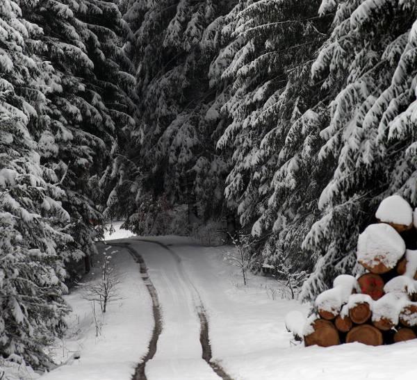 montreal-christmas-tree-picking-johannes-simon-1